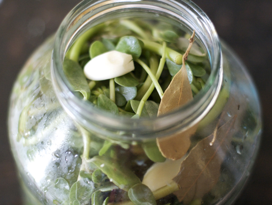 Pickling purslane in a jar