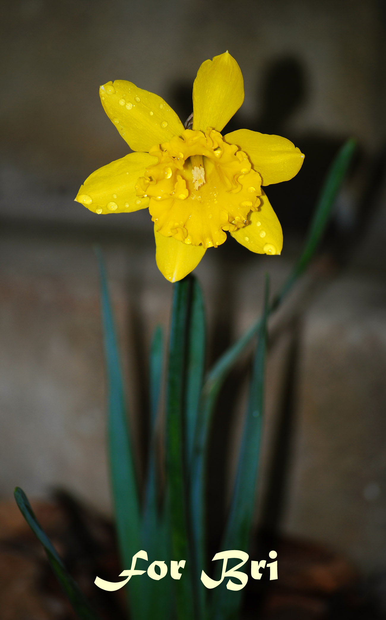 Yellow for Bri