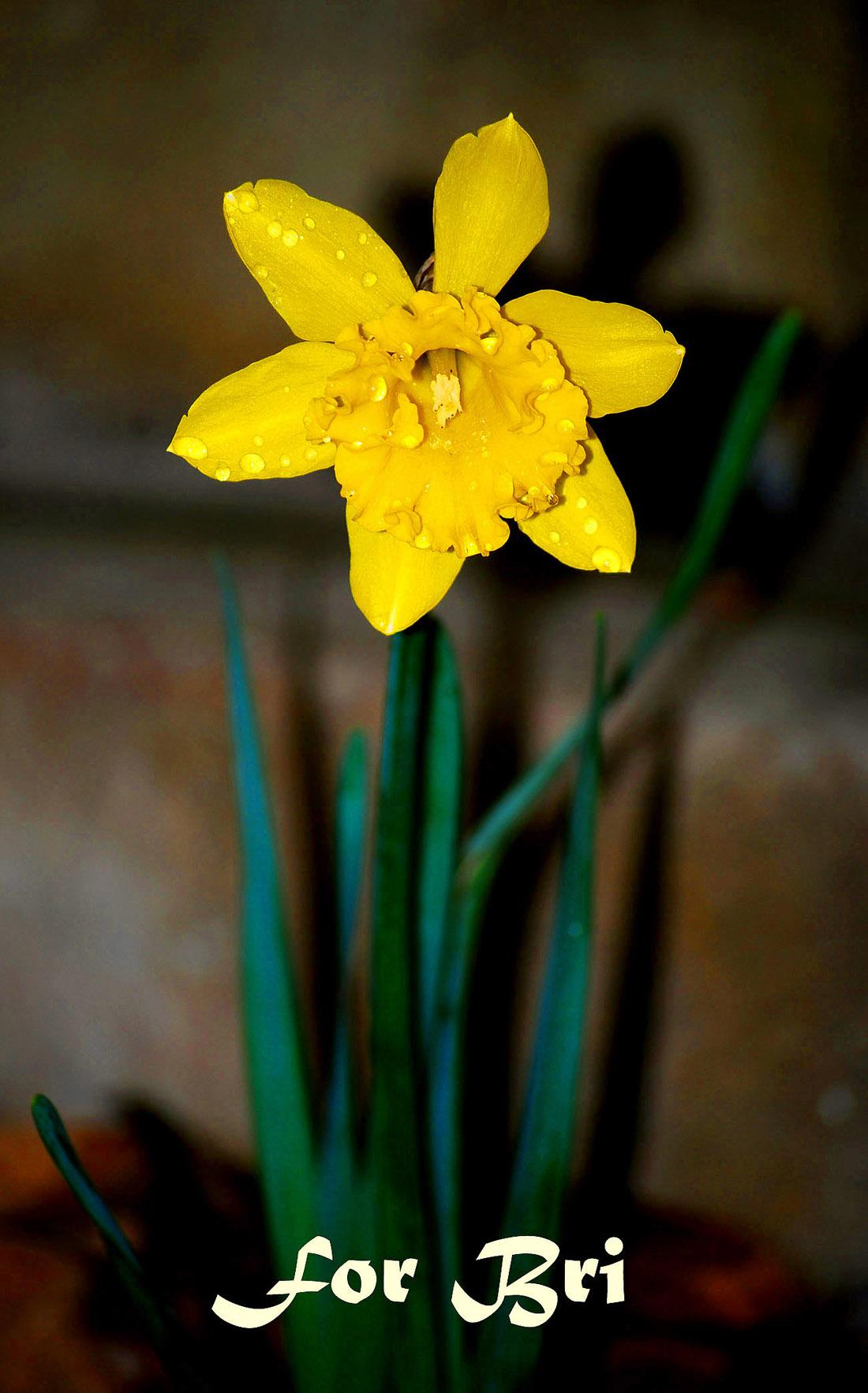 yellow_for_bri1
