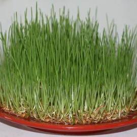 Happy Novruz!
